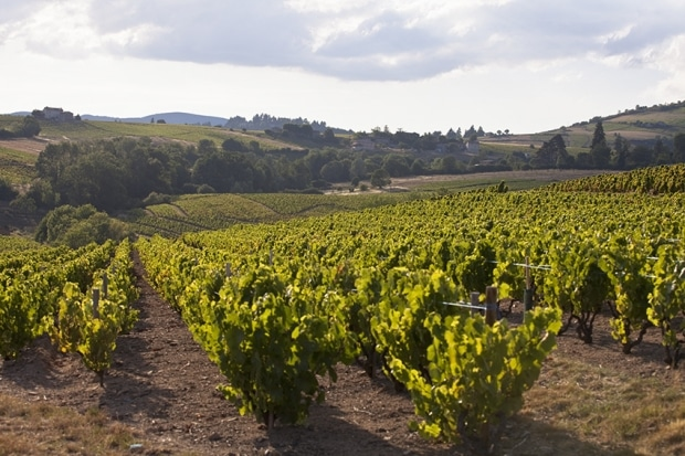 vignoble Lantignié Vignerons et vins lantignié